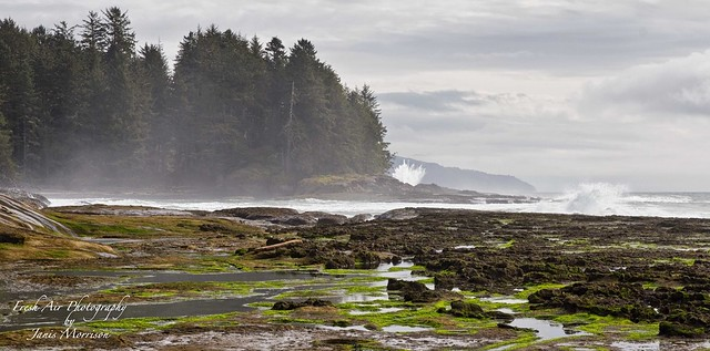 Misty Botanical Beach - with waves crashing in the background.