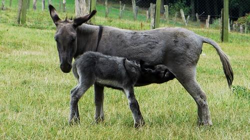 donkey-baby-1