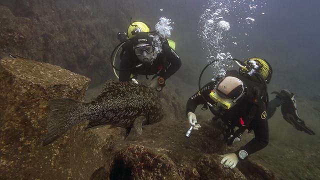 Grouper Garajau Nature Reserve Madeira