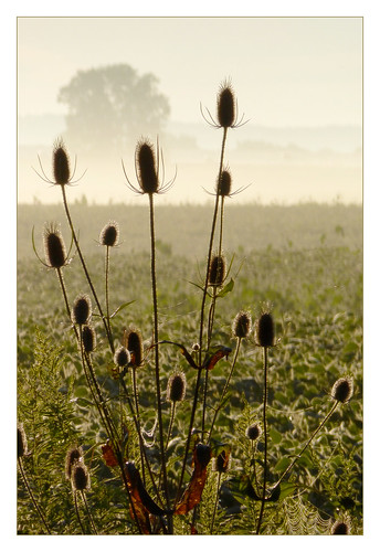 mist newyork field sunrise farm thistle prozak soybean happyplace honeoyefalls timothyvogel