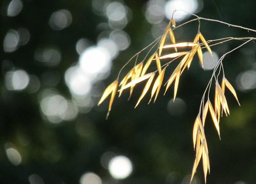 sunset grass october bokeh cheltenham goldenglow donotknowwhymytakenonisshowing2014 mustcheckcamera