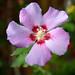 pitite fleur