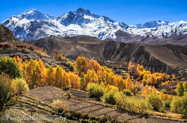 Autumn Colors, Ranipauwa-Kagbeni, Annapurna Circuit, Nepal