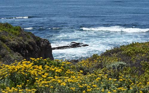 ocean california ca flowers nikon trail montanadeoro wildflowers bluff d7200