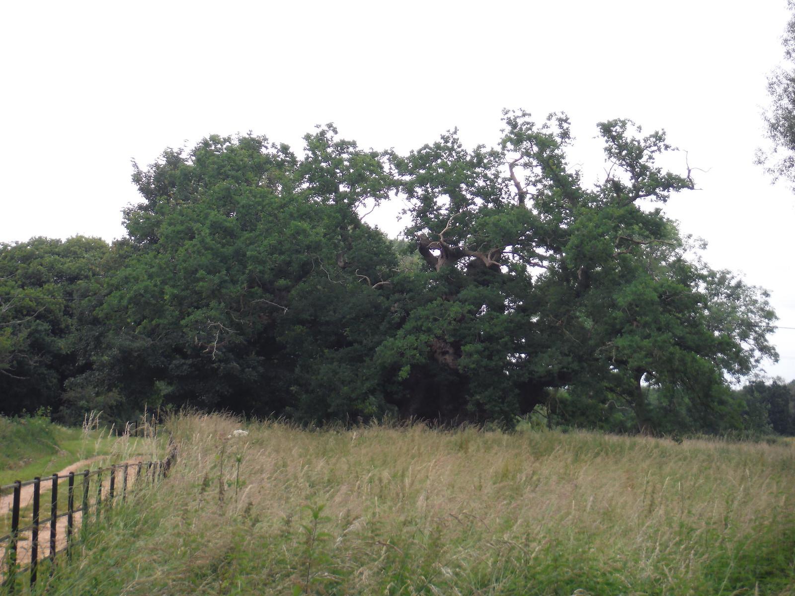 Mottisfont Oak SWC Walk 265 - Dean to Mottisfont and Dunbridge