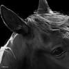 horse_A.P (1)