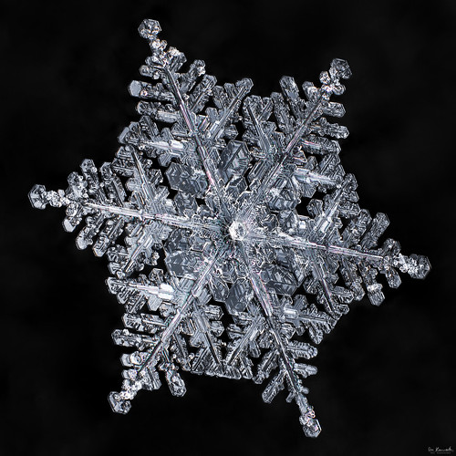 snowflake winter snow macro ice nature water crystal geometry flake symmetry fractal mpe focusstacking donkom