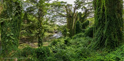 2016 adventure almendarespark cuba cuban gadventures havana holidays lahabana travel canopy creepers foliage forest green outdoors panorama river riverbank summer tree gidzinski gidzinska grainconnoisseur