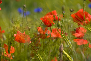 Happy Midsummer! | by Infomastern