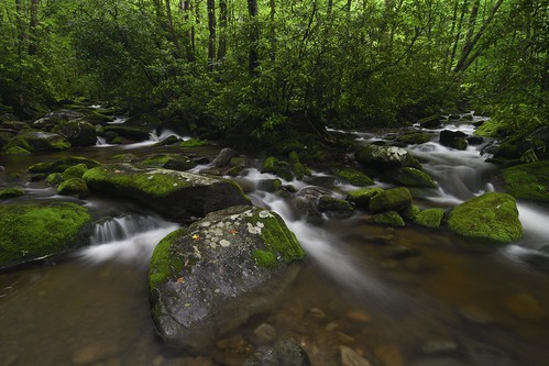 landscape nature water creek nikon d500 smokies roaringfork greatsmokymountainnationalpark
