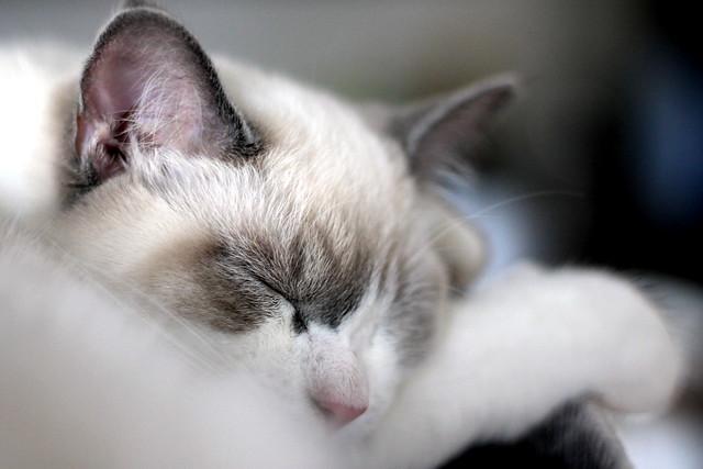 chut! j'hiberne