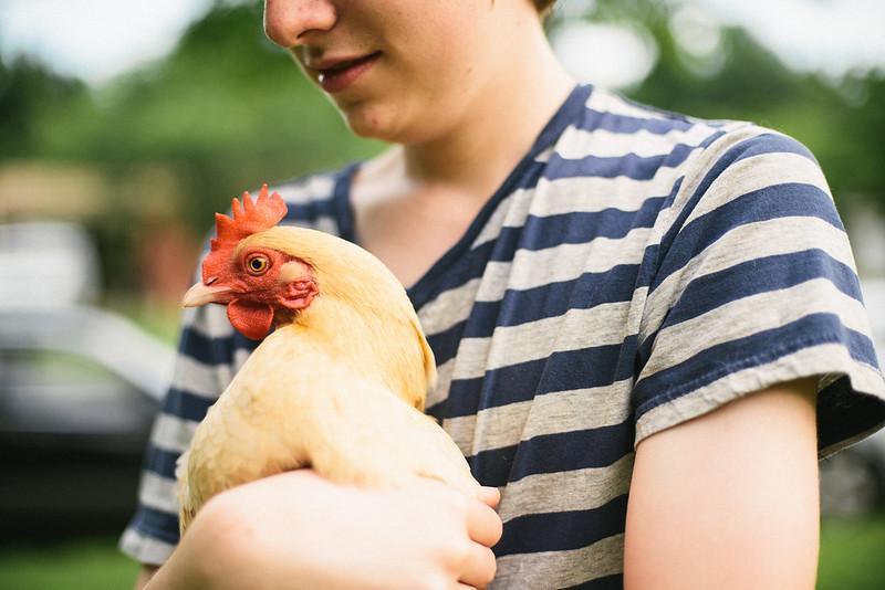 Logan and chicken