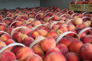 Peach | by Jackson's Orchard
