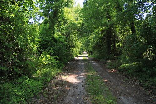 road park canal nc dismal state north may swamp carolina 2013