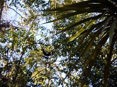 Cerro Elefante Paragliding