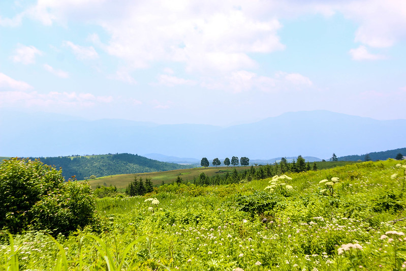 2014-07-26_00075_霧ヶ峰.jpg