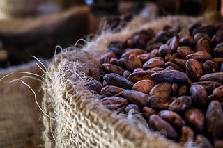Cacao Seeds | by giulian.frisoni