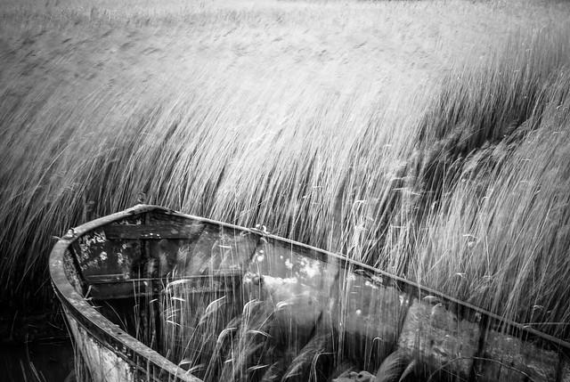reed waves