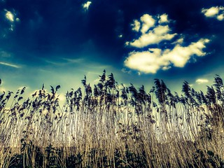Grass with blue sky | by Imageation
