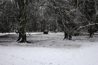 Snow in the park | by stanzebla