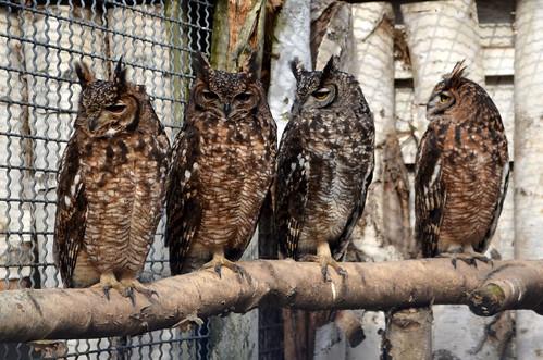 Tierpark Bruchsal