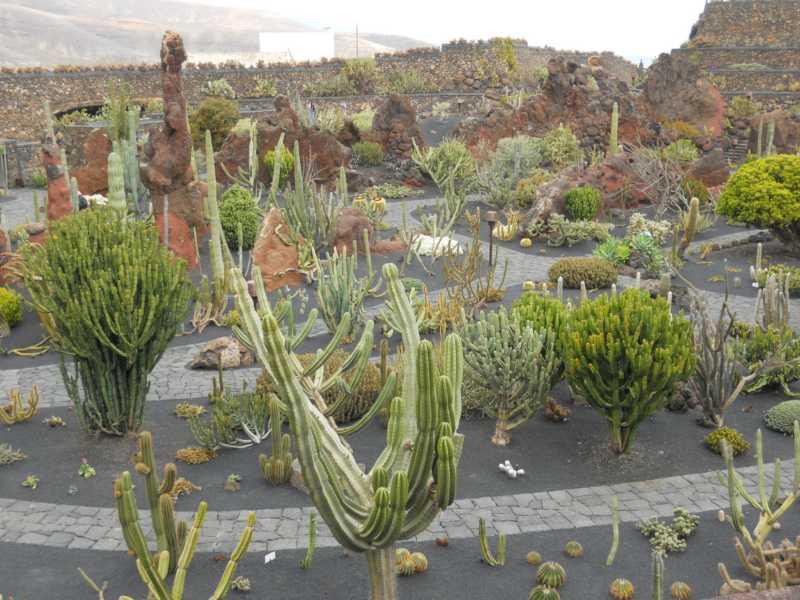 Cactus del mundo