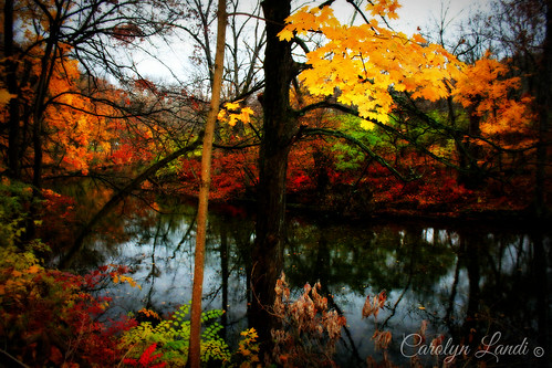 autumn trees fall water leaves creek reflections river landscape colorful stream seasons pennsylvania seasonal scenic pa easton waterscape bushkill carolynlandi