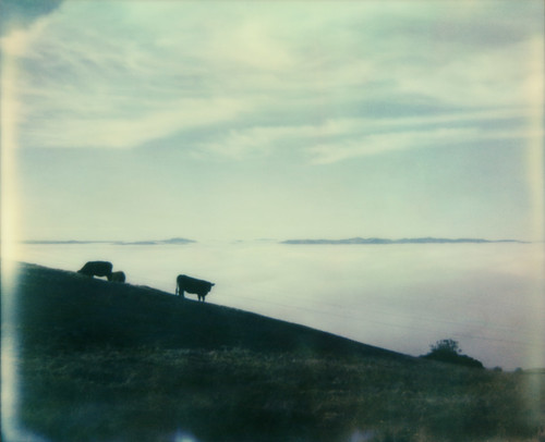 sky film fog view cows hill instant spectra gravityhill lichauroad theimpossibleproject sonomamtn pz680