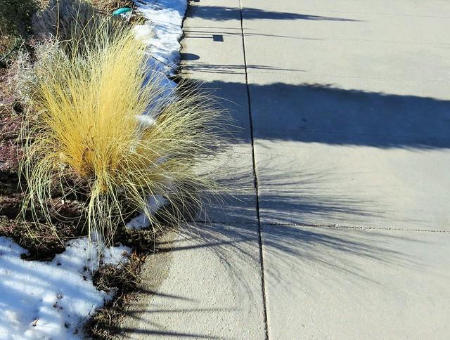 Grassy Shadow