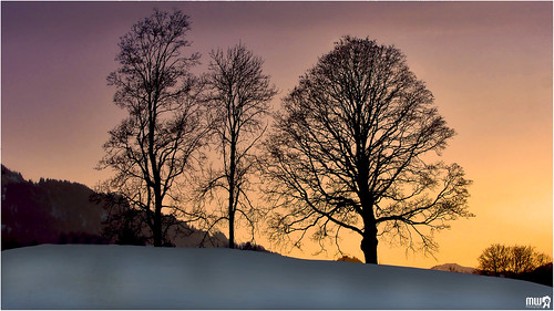 trees winter sunset sky panorama snow alps nature silhouette canon season landscape schweiz switzerland evening europe colours lonelyplanet snowscape nationalgeographic winterscape simmental oberwil cantonberne