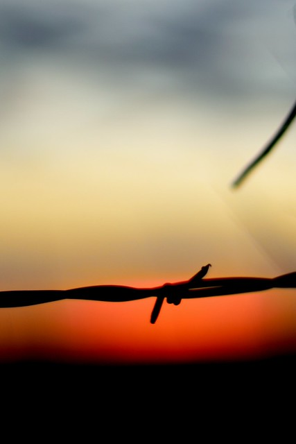 barbed sunset