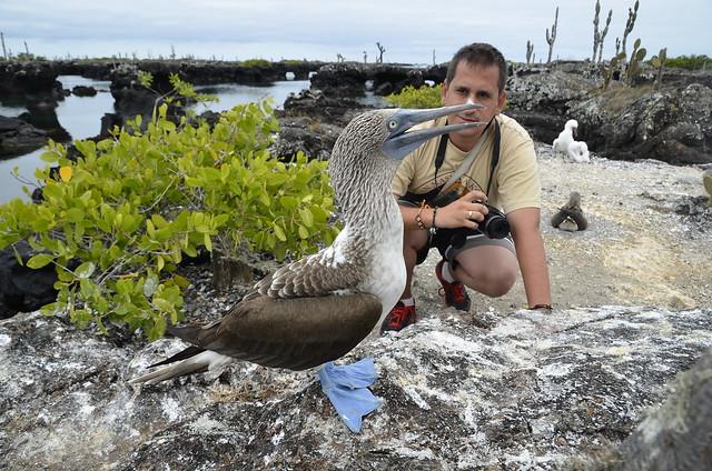 Sele con un piquero de patas azules en Isabela (Galápagos)