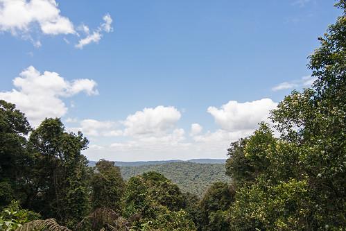 sky heritage nature ecology landscape rainforest australia nsw aus unescoworldheritage worldheritage borderrangesnationalpark canon40d borderrangesnp tokina1116f28atxprodx