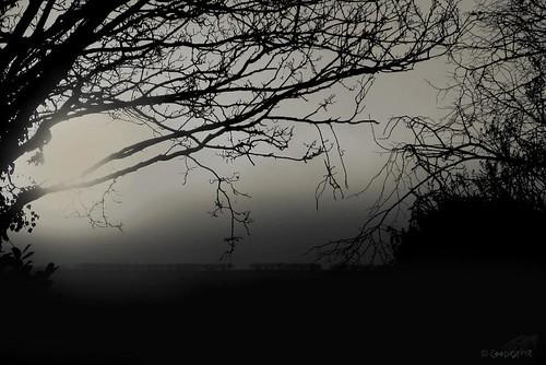 mist sunrise backgarden breakingthrough dawnmist murkysunrise