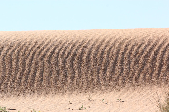 Sand Dune on Birdsville Track