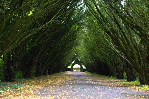 maynooth college trees mbe september 2013 autumn stpatricks kildare entrance celtic cross ireland cemetery