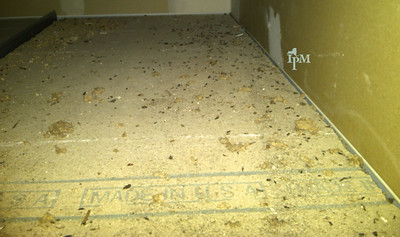 Photo shows an unfinished and unpainted space. The bottom of the picture is a light brown material and lots of small black rodent droppings are littered across the surface.