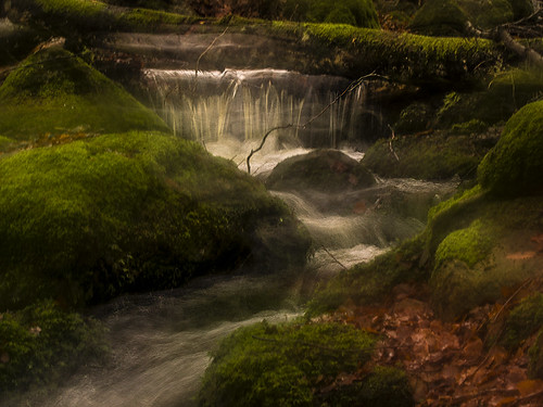 autumn water creek river flow moss stream sweden stones autumnleaves icm halland mygearandme