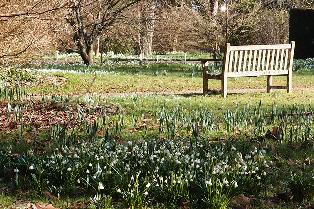 Nymans Gardens : famous for many varieties of snowdrop - 22.Feb 2014
