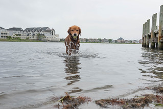 Dog Retrieving Ball From Water Near Pier | by Au Kirk