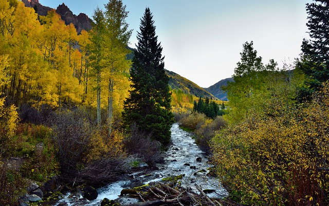 A Creek Flows by in the Mountains of Colorado