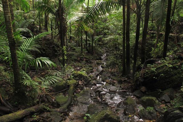 El Yunque Cloud Forest