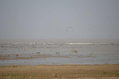 EAAF025 Poyang Hu Nature Reserve