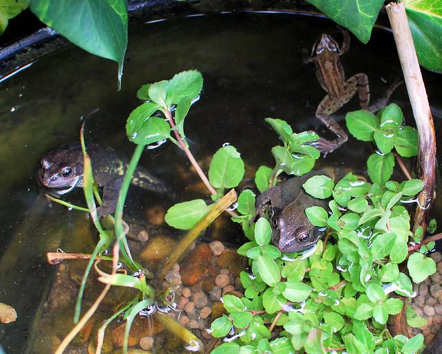 Pond 1 20120506