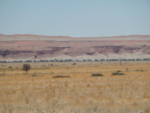 Onderweg naar Sesriem - petrified dunes