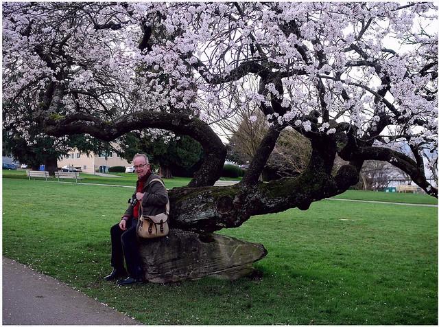 it's Sakura-time in Vancouver - Tom
