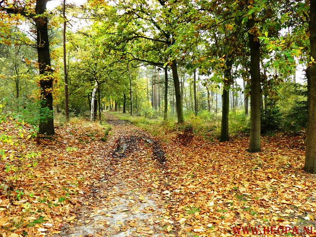 20-10-2012     Wedeblick-   Driebergen        25 Km (76)
