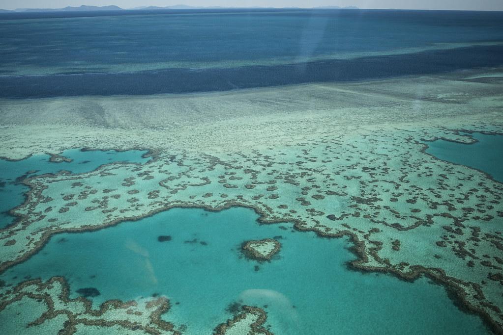 要價不斐的心型珊瑚礁