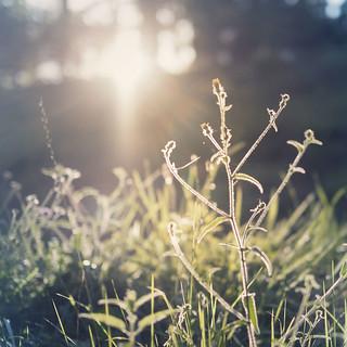 Grass DOF | by Raúl Urrea