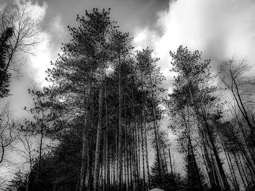 winter black nature noiretblanc hiver arbre numérique